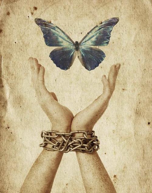 05.-Freedom-Butterfly